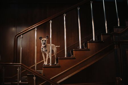 mixed breed dog standing on a wooden staircase indoors