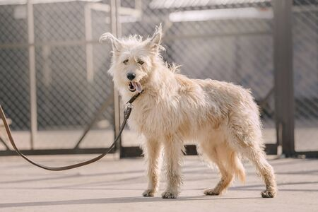 adorable mixed breed dog standing in an animal shelter
