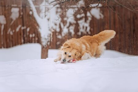 mixed breed dog posing outdoors in winter