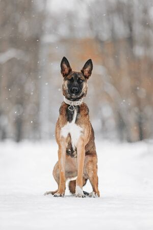 young mixed breed dog with one eye posing outdoors in winter