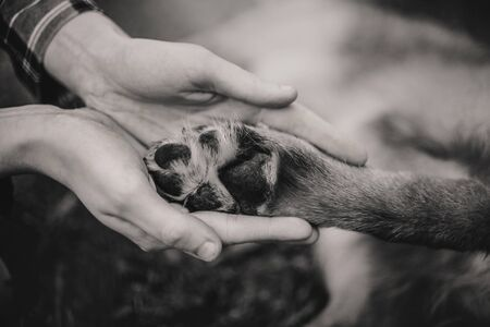 Woman's hands gently hold the dog's paw on grass