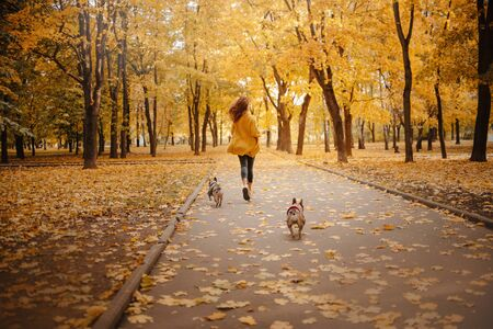 woman walking her dogs in an autumn park