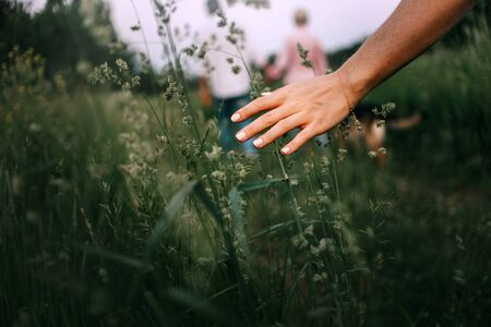 womans hand caressing grass on a field in summer Stok Fotoğraf
