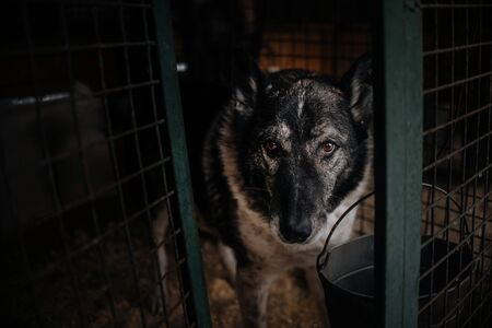 old dog in animal shelter cage, waiting for adoption
