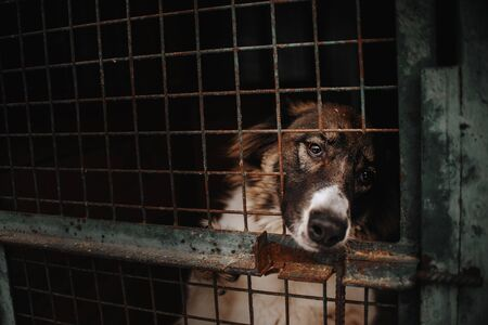 sad dog portrait in animal shelter cage, waiting for adoption Stock Photo