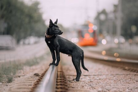 black mixed breed puppy posing on the rails