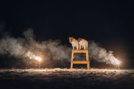 Two jack russell terriers sitting in the smoke of sparklers at night
