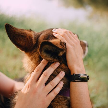 owner hands petting dog head, concept of loving a dog