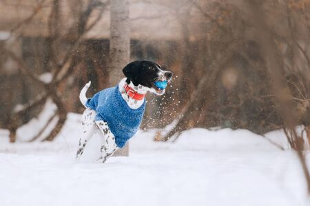 mixed breed dog playing outdoors in winter
