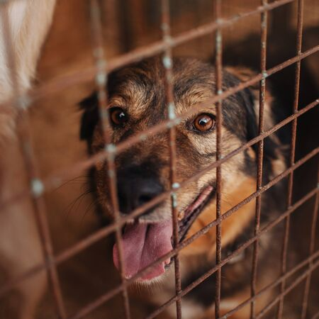 mixed breed dog behind bars in animal shelter Stock Photo