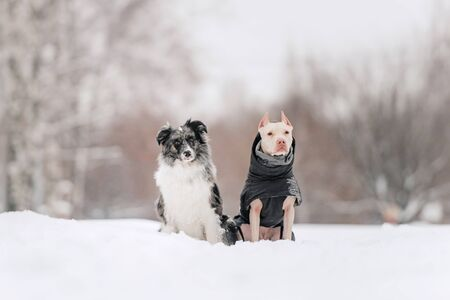 two adorable dogs sitting together outdoors in winter