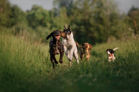 group of happy dogs running after each other on grass