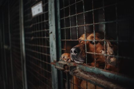 sad animal shelter dog waiting behind bars in a cage