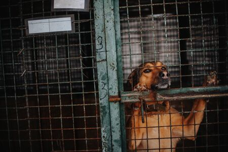 sad red dog posing in animal shelter cage Stok Fotoğraf