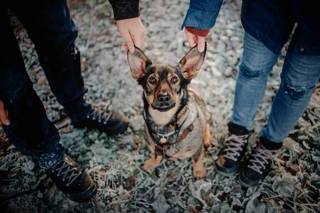 funny mixed breed dog portrait outdoors with owners
