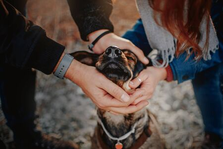 owners caressing their mixed breed dog outdoors