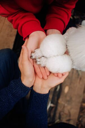 family holding hands with dog paws, top view