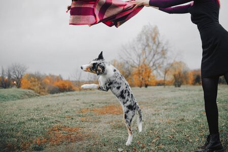 border collie puppy playing with owner outdoors