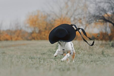 funny puppy running with a hat outdoors Stock Photo