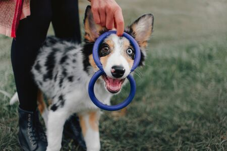 happy playful border collie puppy outdoors