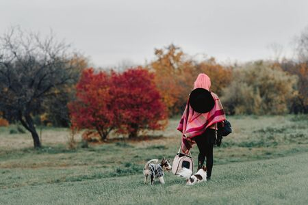 woman with pink hair walking dogs in the park, rear view