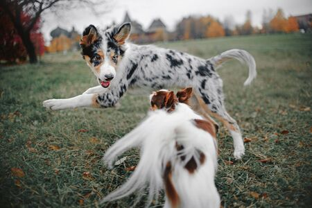two dogs playing together outdoors in autumn