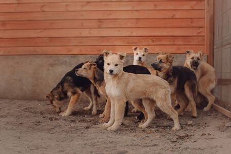 group of mixed breed puppies in a shelter