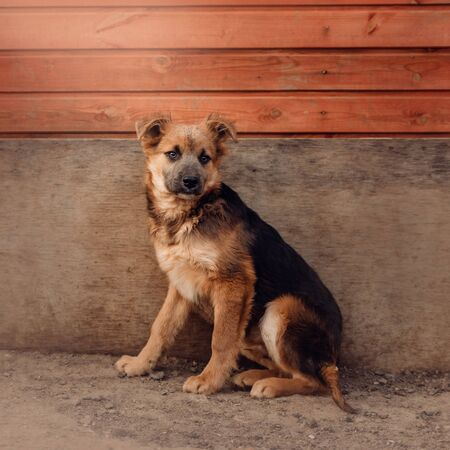 mixed breed puppy sitting by the wall in a shelter