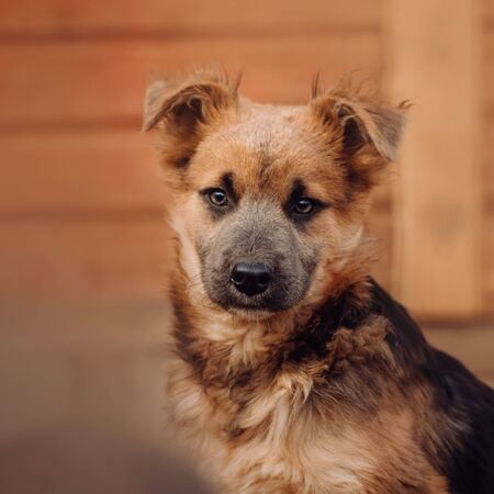 young mixed breed puppy portrait