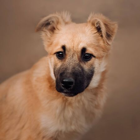 young mixed breed puppy portrait in a dog shelter