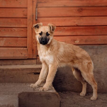 mixed breed puppy standing in a dog shelter