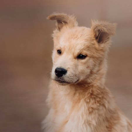 mixed breed puppy portrait close up outdoors