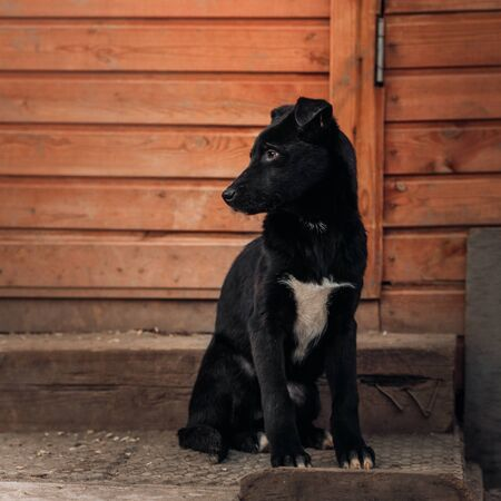 black mixed breed puppy sitting in a dog shelter