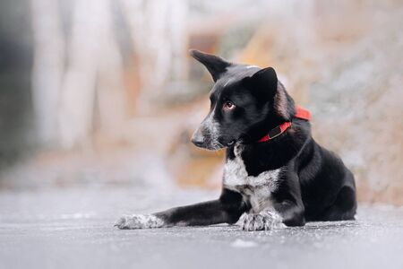 mixed breed dog lying down outdoors in winter