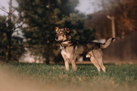 grey mixed breed dog standing outdoors