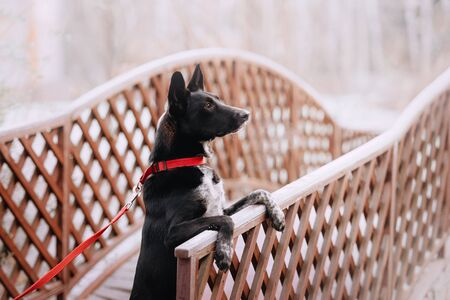 mixed breed dog portrait outdoors in winter