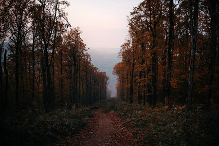 view of a forest trail on the hills in autumn 版權商用圖片