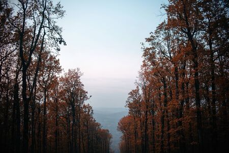 blue sky and top of the forest trees in autumn on a hill 版權商用圖片