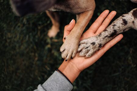 two dog paws in owners hand, top view