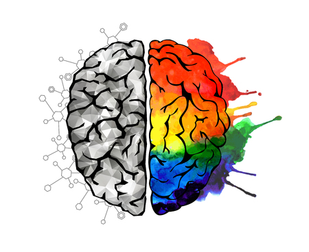 Creative concept of the human brain. Right and left side