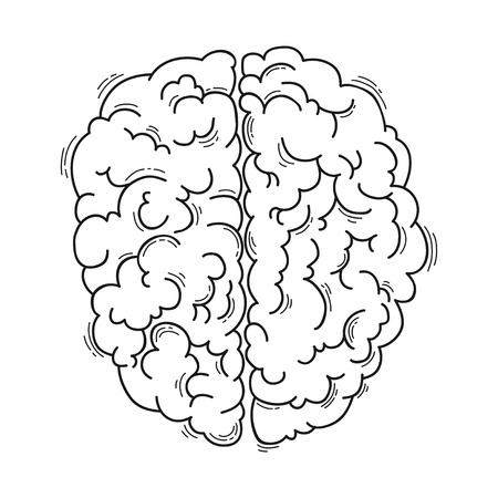 Human brain for medical design Ilustrace