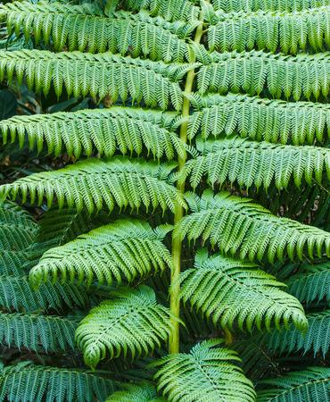 helechos: Helechos en la naturaleza