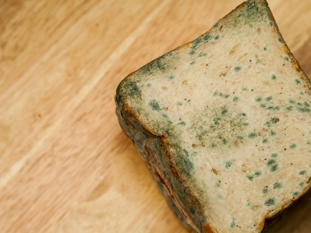 Mold up the bread that has expired.
