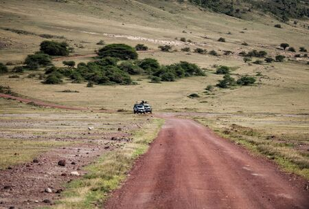 road in wild, way for wildlife travel