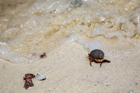 small hermit crab on the beach 版權商用圖片