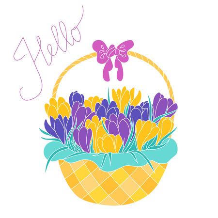croci: Bunch of purple, violet and yellow crocus flowers in a basket. Early spring flowers composition. Greeting card with violet and yellow crocus flowers bouquet in a basket isolated on white background.