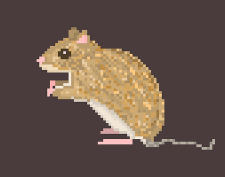 squeal: Brown field mouse isolated on dark brown background