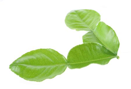 lemon wedge: Kaffir lime leaf isolated on white background