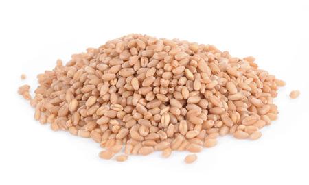 sorgo: Millet hierba aislado en blanco Foto de archivo