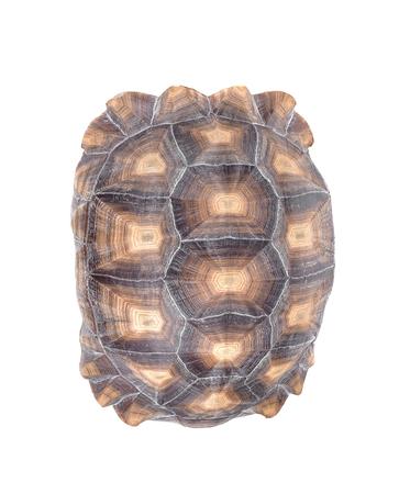 Turtle isolated on white Фото со стока